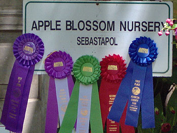 Apple Blossom Nursery